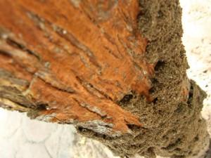 Drywood termite habitat