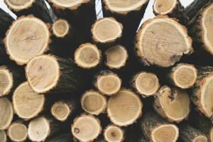 Firewood pile as a drywood termite habitat