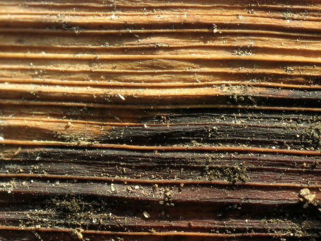 Termite infestation signs on wood