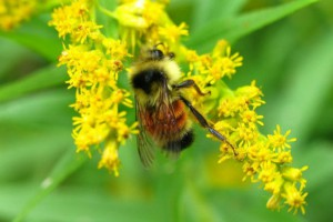 Honeybee secrete venom with Melittin for biotech termite pest control baits