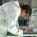 Jatropha curcas essential oil against subterranean termites