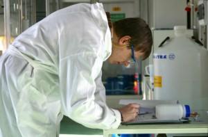 Researcher studies the effect of Jatropha oil against termites