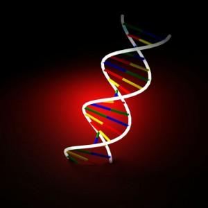 Gene engineering for biotech termite pest control