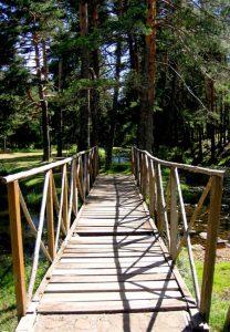 Termidor foam termicide for bridges