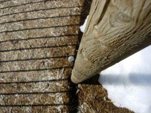 Wood pole treated with diy Termidor drywood termites