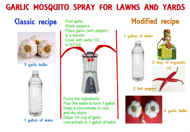 DIY garlic mosquito spray for lawns and yards - Homemade Mosquito Yard Spray Is Cheap, Effective And Easy-to-do