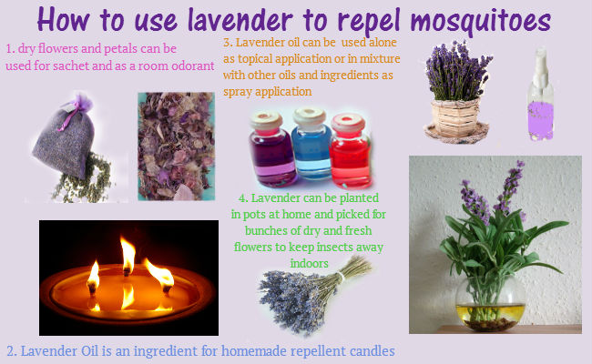 How To Use Lavender For Mosquito Repellent