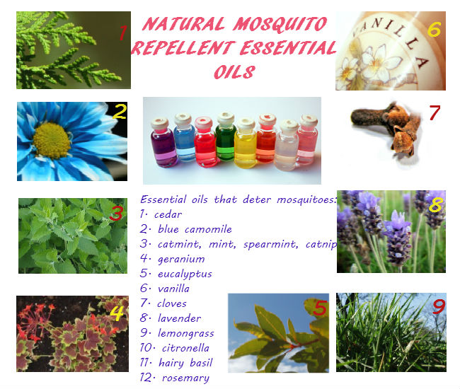Natural mosquito repellent essential oils