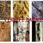 How to Detect and Repair Termite wood Damage