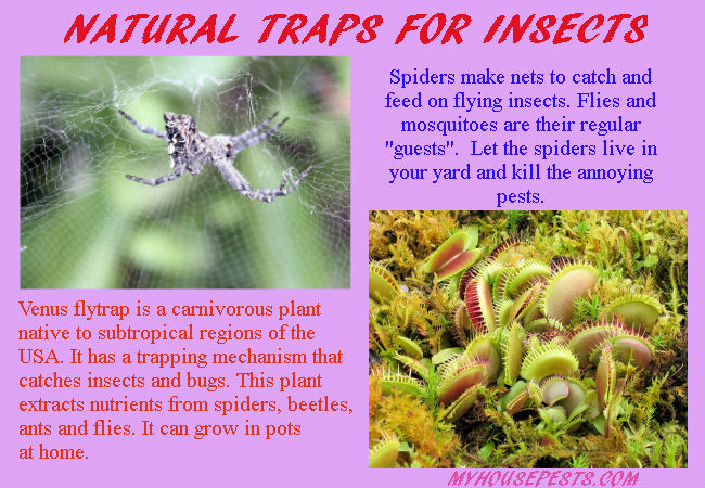 Natural enemies for flies and mosquitoes control