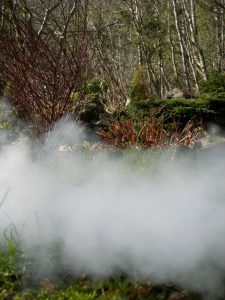 Professional mosquito control fumigation of vegetation