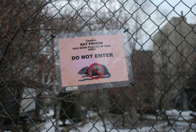 Warning sign that professionals use poison to kill Norway rats