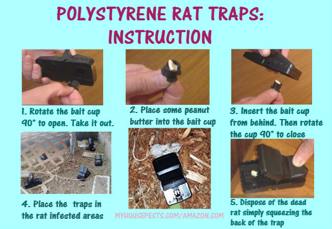 how to set mechanical rat trap