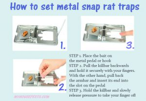 How to set metal snap rat trap
