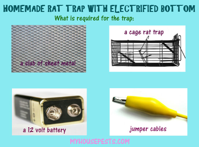 Electrified rat trap diy